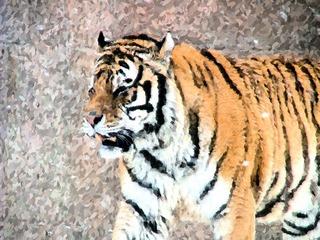 虎の画像18