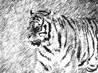 虎の画像19
